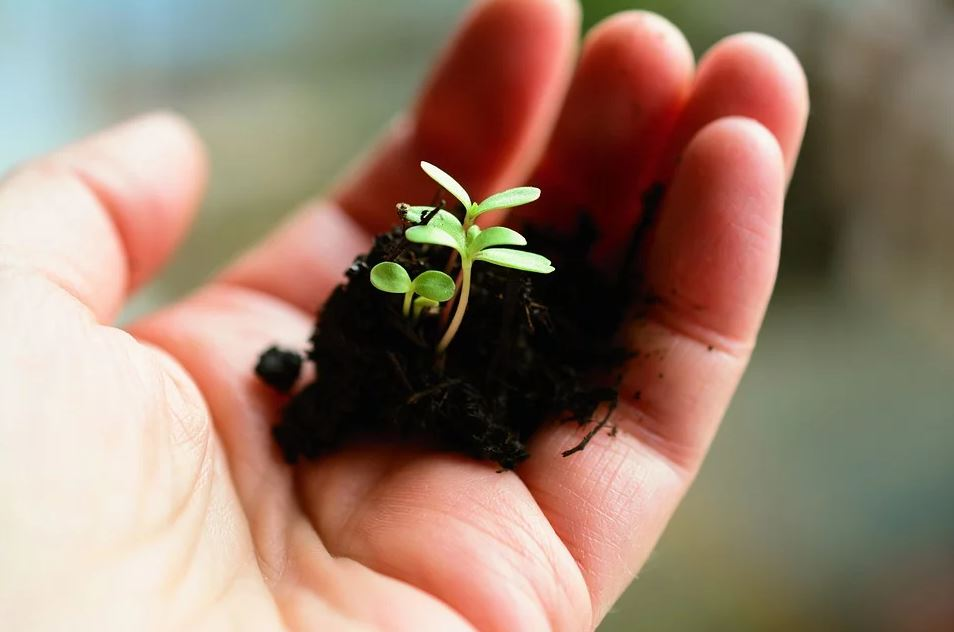 A handful of soil