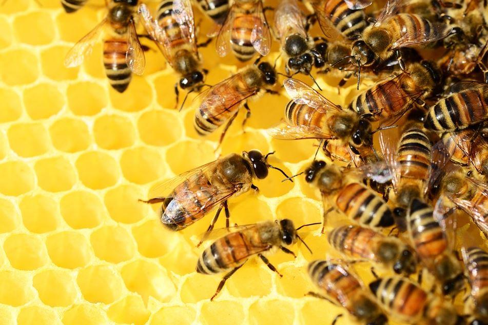 benefit of honey